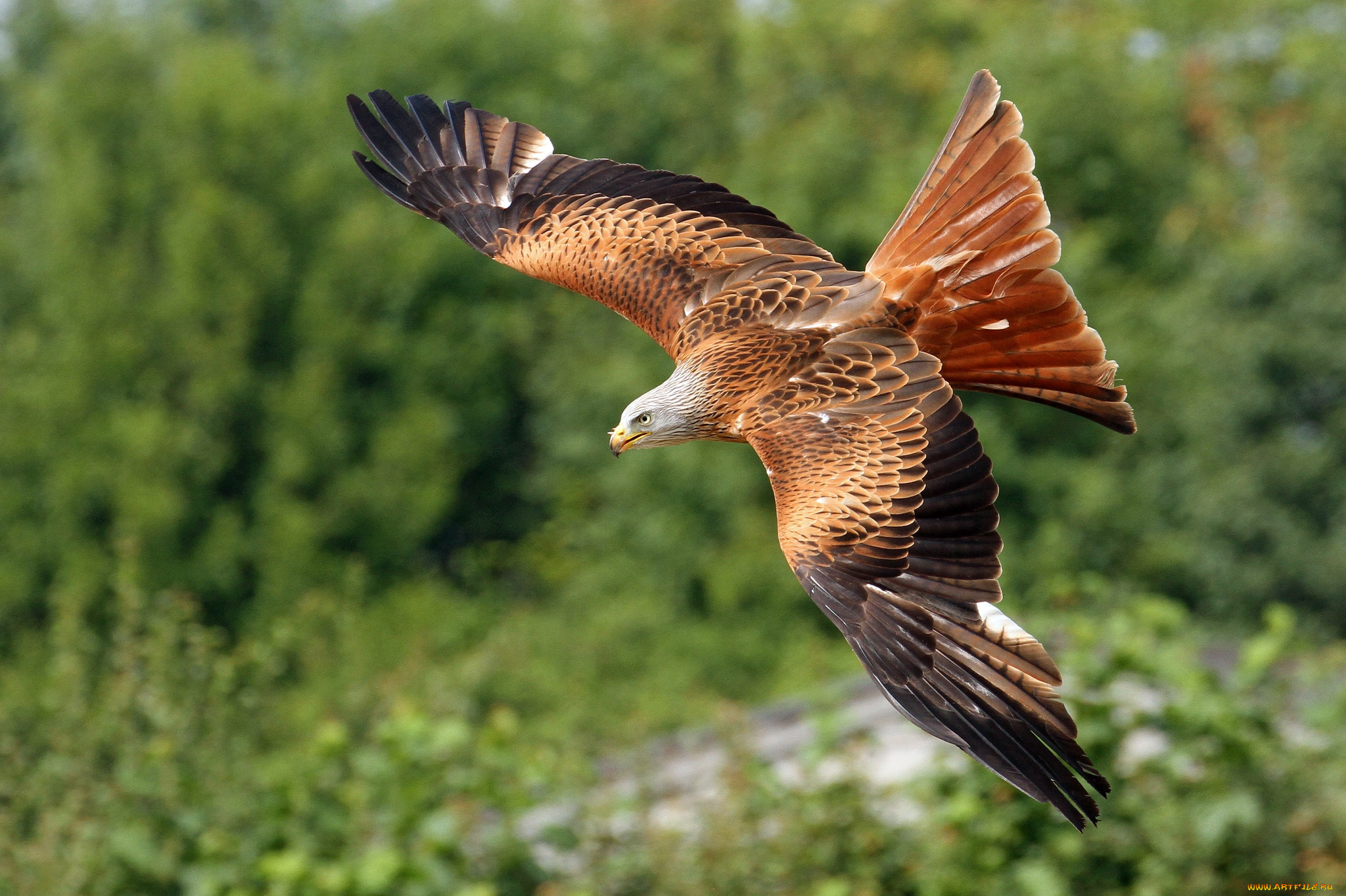 летающие птицы картинки и названия русском языке существует